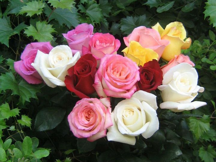 Roses From The South by Johann Strauss II