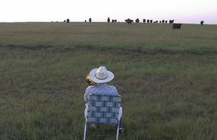 Man plays trombone on a field for cows