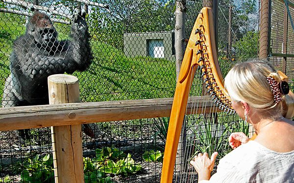 Terri Tacheny plays harp for primates