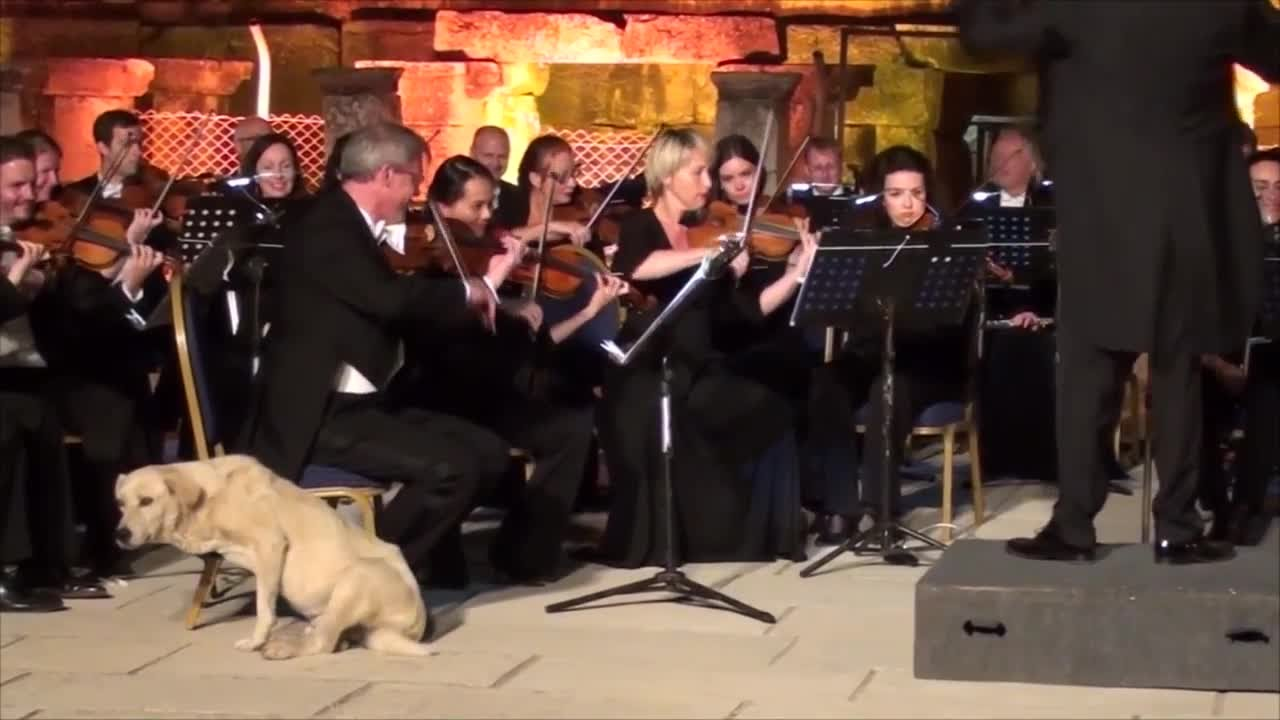 Dog Interrupts Live Music Concert