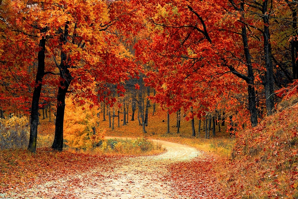 Classical Music about Autumn