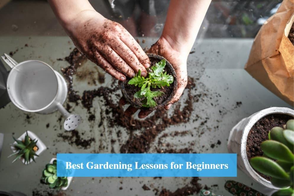 Gardening Lessons for Beginners